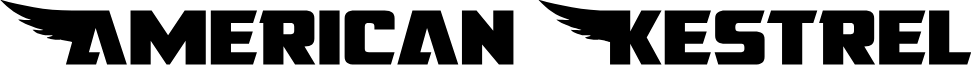 American Kestrel Straight Exp