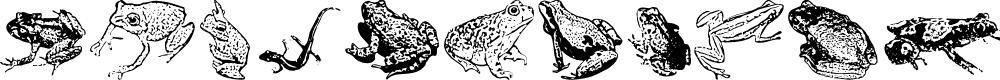 Preview image for AmphibiPrint Font