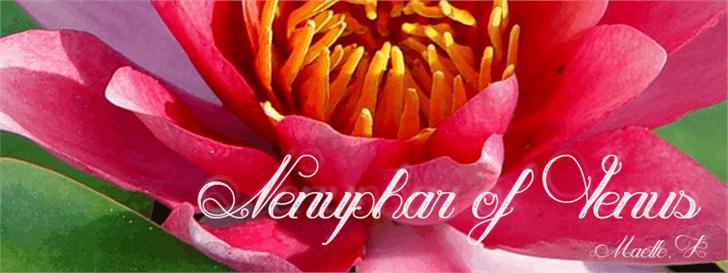 Nenuphar of Venus Font plant red